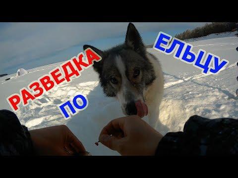Разведка по ельцу. И ловля ГОРБАЧЕЙ )))Рыбалка март 2018