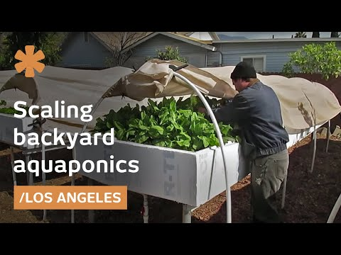 Backyard Aquaponics As Self Sustained Farm In  Sub Urban La
