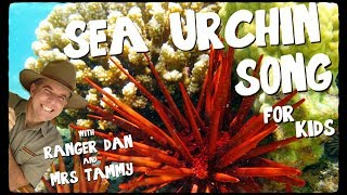 Download Sea urchin song for kids - Searchin' for Urchin 3Gp Mp4