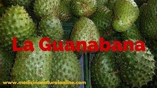 La Guanabana   Propiedades   Las Plantas Curativas