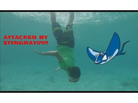 Day 6 - Barbados | STING RAY ATTACK!!!