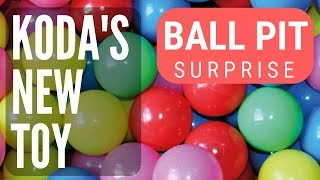 Koda's new toy || BALL PIT SURPRISE