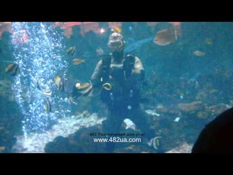 Подводное шоу в большом океаническом аквариуме в торговом центре