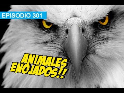 Animales Enojados! #whatdafaqshow