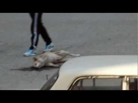 Шокирующие кадры, Спасение отравленой собаки