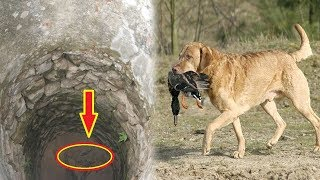 Chú chó ngày nào cũng mang đồ ăn thả xuống giếng cạn, khi nhìn xuống ông thấy....