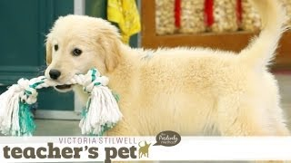 Puppy Mouthing (Training Basics) | Teacher's Pet With Victoria Stilwell