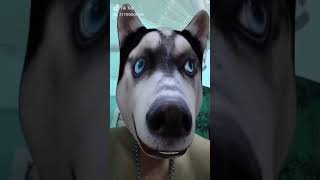Video hài nhất năm - Em không nghe lời mẹ phiên bản chó