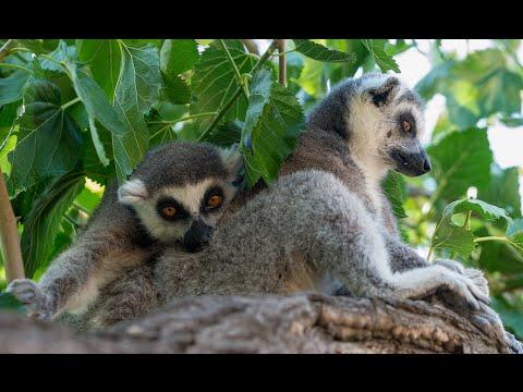 Visiting Animals in Yerevan Zoo in Nor Nork District, Armenia 2015