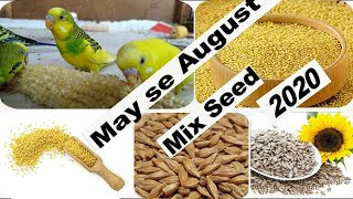 Budgies Parrot Summer mix Seed May & August 2020 || Love birds Mix Seed Summer