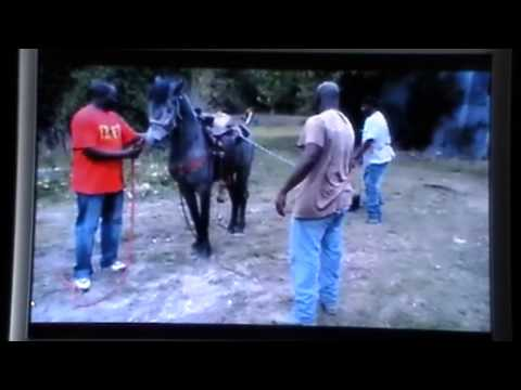 Several Guys Harass & Abuse Helpless Young Horse - Human Ignorance 101- Rick Gore Horsemanship