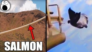 Canon Launches Salmon at 22mph Through This 1700 Foot Long Tube
