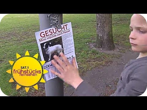 HUNDEDIEBSTAHL - Wo ist Mimi? | SAT.1 Frühstücksfernsehen | TV