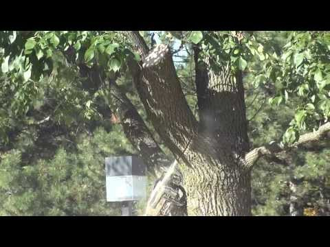 Crane assisted Ash Removal by Sunrise Tree Care
