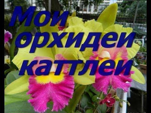 Орхидеи Каттлеи.Уход. Потери. Результат.