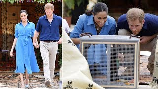 Meghan Markle pregnant changed quickly with the Veronica Beard blue dress in Tonga