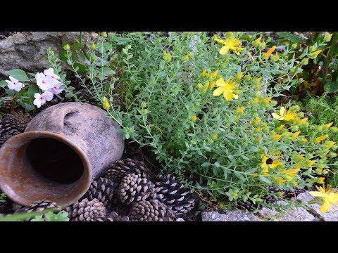 Design of the flower garden perennials in the flower garden I am annoying the annuals