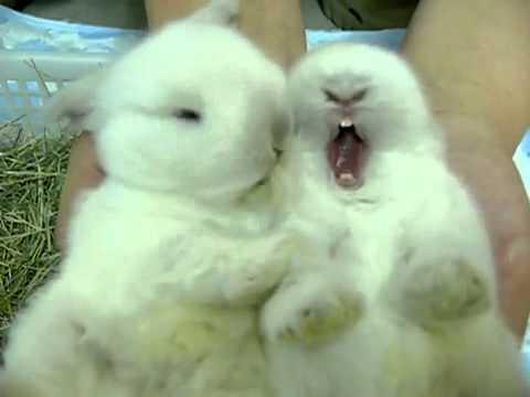 dos conejitos tiernos