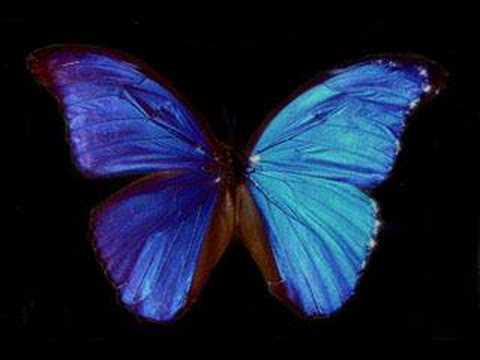 Kaya - Psycho Butterfly