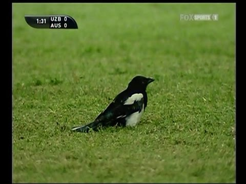 PETA Activist Lucas Neill kills an innocent bird live on TV
