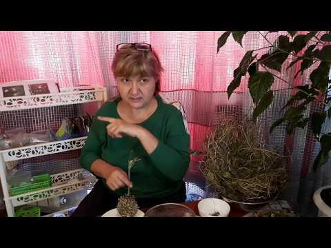Выращивание своих семян овощей – сбор, проверка на всхожесть, калибровка и дражирование