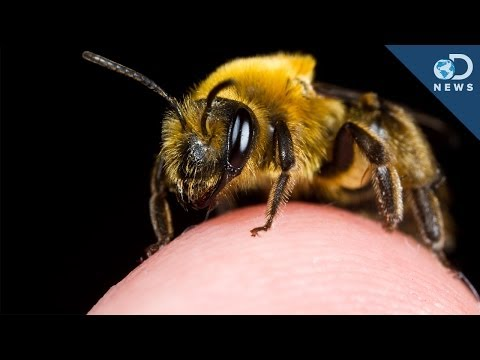 The Most Painful Places To Get Stung By A Bee