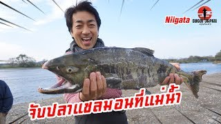 จับปลาแซลมอนฝูงใหญ่ที่นีงะตะ SUGOI JAPAN - สุโก้ยเจแปน ตอนที่ 225 Niigata