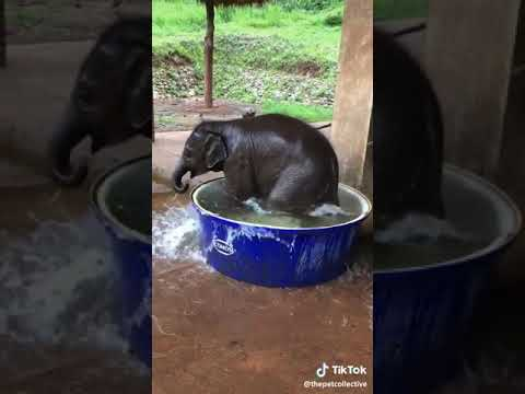 Baby elefant bath
