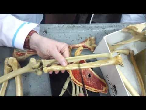 Видеоуроки анатомии - видео