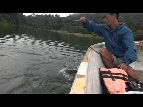 Malaysia Toman Fishing 2013.