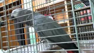 Download Lagu ajaib burung bisa bicara tahlilan dan menyebut nama allah Gratis STAFABAND