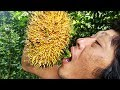 Makanan Hutan | Makan biji Buah hutan (Buah Benda/Tarap) yang manis dan gurih.