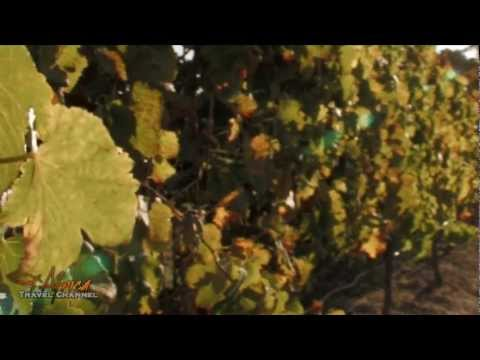Rietvallei Wines Robertson Wine Valley South Africa - Africa Travel Channel