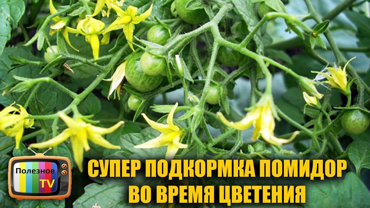 ведомости содержат чем обработать помидоры для образования завязи сиденье
