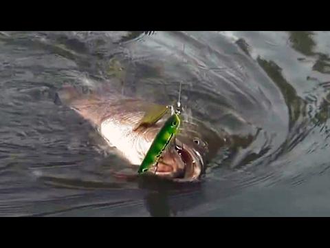ตกปลาเหยื่อปลอมขั้นเทพ กับ Gong Lei