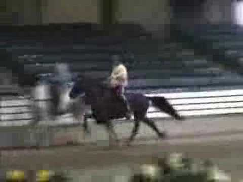 Speed Racking horse Smooth and clocked at 25 MPH Amazing!!