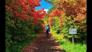 Mount Tokusenjo, Japan: Place Where Hiking Trail Surrounded by Azaleas