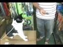 白子のりを見せるとお手をするネコ