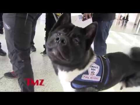 Henry Cavill and his dog, Kal-El at LAX