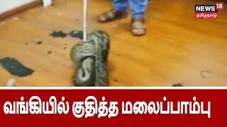 வங்கியில் திடீரென குதித்த ஒன்றரை மீட்டர் நீல மலைப்பாம்பு   big snake entered into bank in china
