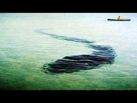Гигантский подводный змей в Крыму. Карадагский змей