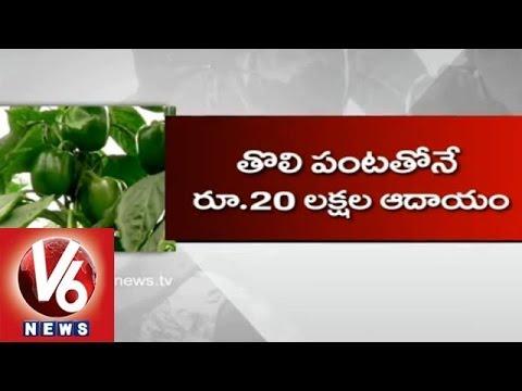 Capsicum Cultivation Under Shade Net - Kadapa Farmer Venugopal Wonders