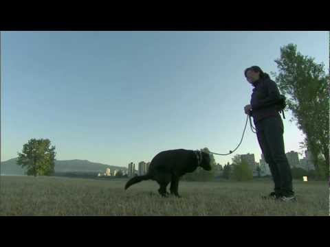 Dog Dazed - Premieres Thurs March 21, 2013 on CBC Doc Zone (9 PM)