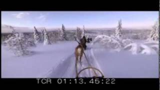 Reindeer sled trip 