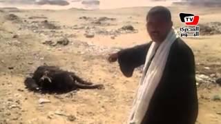 أهالي قرية «أبو عزيز» يشتكون من نفوق المواشي: «عايزين حل»