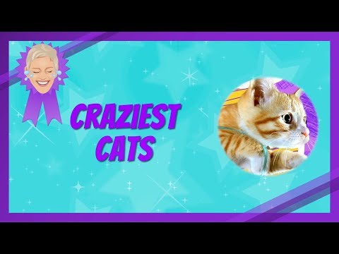 download song Craziest Cat Videos free