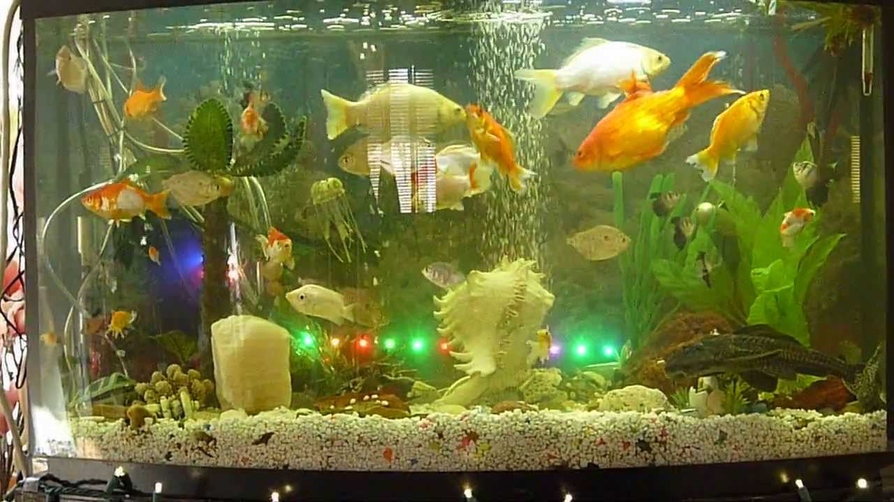 New fish tank decoration youtube for Aquarium decoration for goldfish