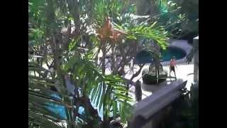 For sale : Chateau dale tropical villa ,2/2B.Jomtien/Pattaya - www.joelizzerd.com [id1235 ]