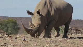 Amazing Rhinos in Sanbona Wildlife Reserve