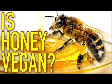 Is Honey Vegan? Healthy? Humane?